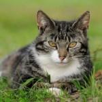 Grass_Cat